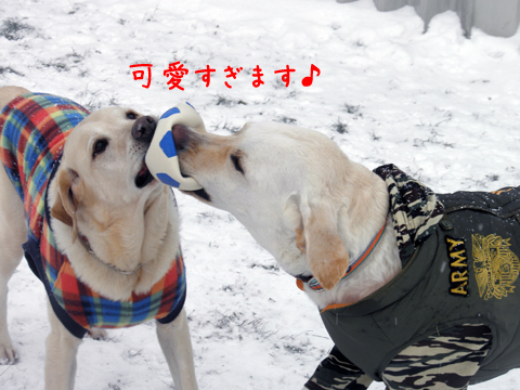 fadymaru3_20120104133632.jpg