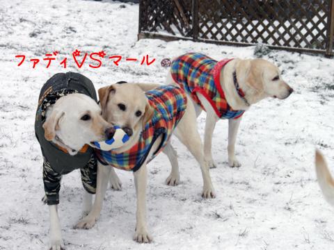 fadymaru_20111201213443_20120104133633.jpg