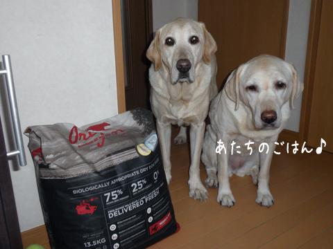 food1_20111208212825.jpg