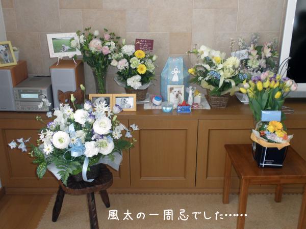 fuuta_20120319214535.jpg