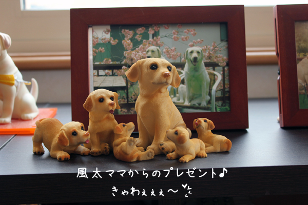 fuuta_20120402183731.jpg