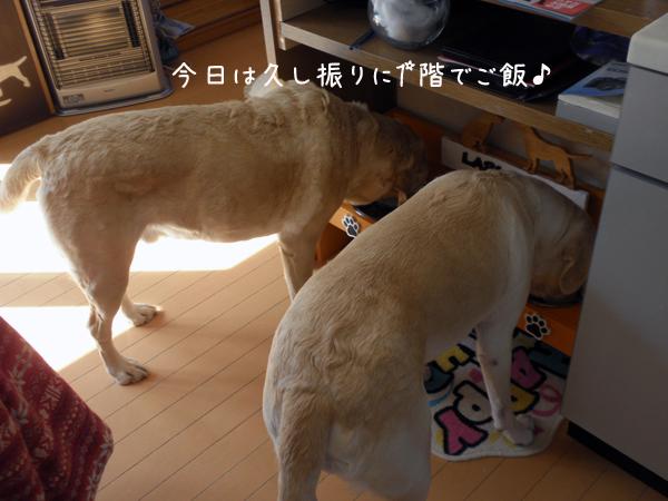 gohan_20120310214751.jpg