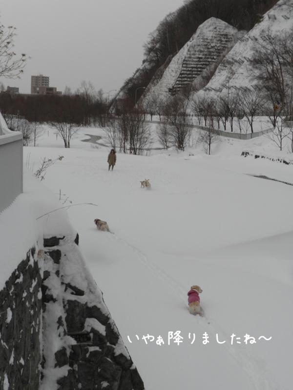 hiroba1_20111227224901.jpg