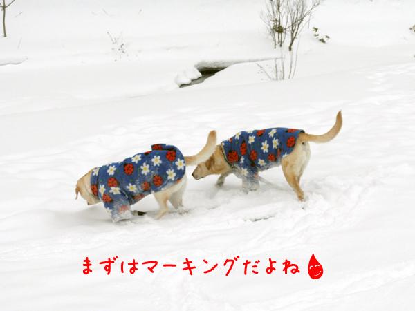 hiroba1_20111229213905.jpg