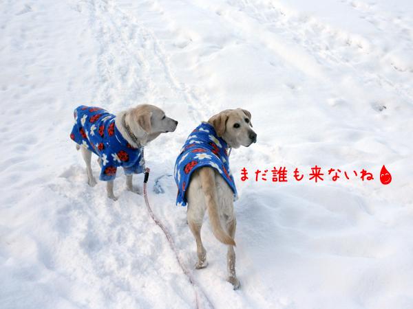 hiroba1_20120215203027.jpg