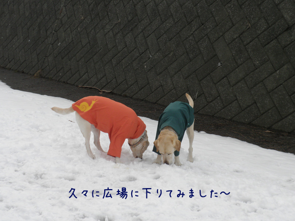 hiroba1_20120401173141.jpg