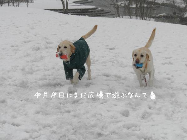 hiroba1_20120406210659.jpg