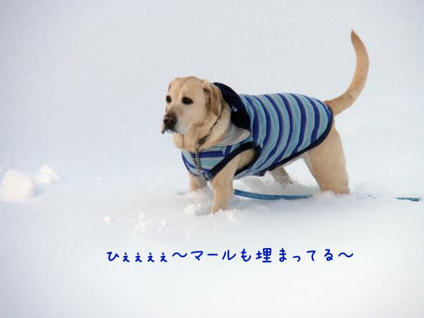 hiroba2_20120224231231.jpg