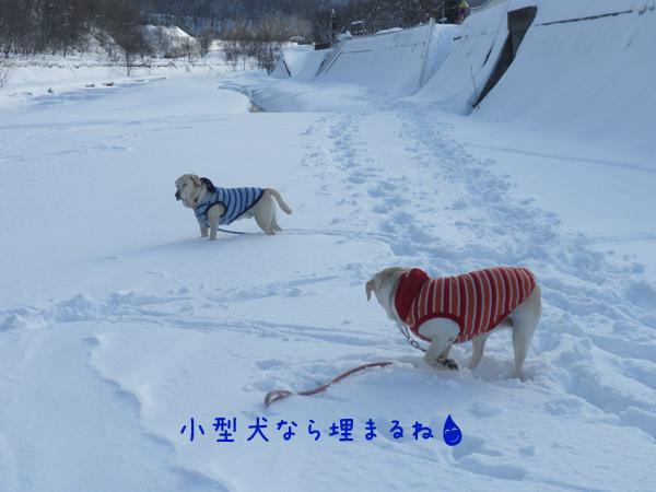 hiroba3_20120224231229.jpg