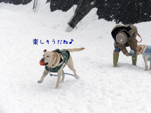 hirobamaru.jpg