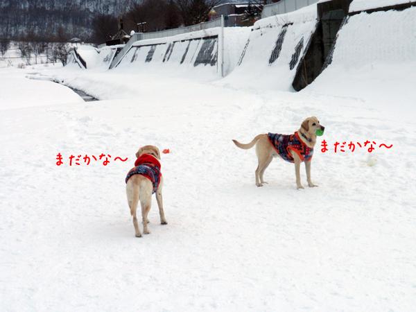 hirobamatu_20111230220058.jpg