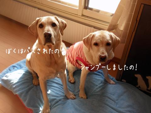 hutari1_20111217215613.jpg
