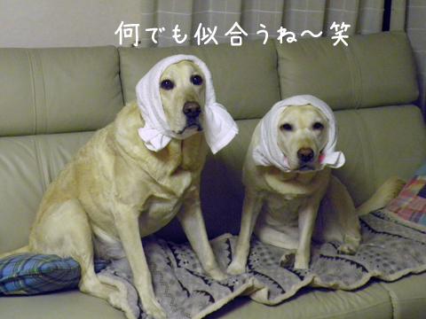 hutari_20111226221315.jpg