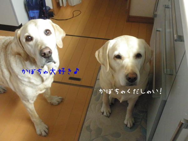 hutari_20120407214520.jpg