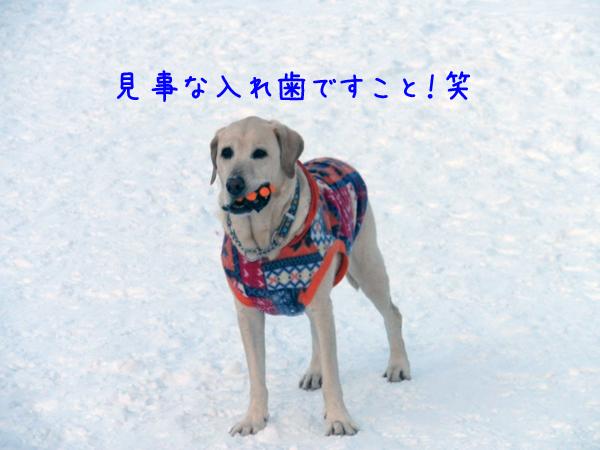 ireba_20120125204946.jpg