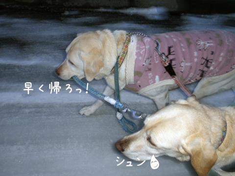 kaeri1_20111206212558.jpg