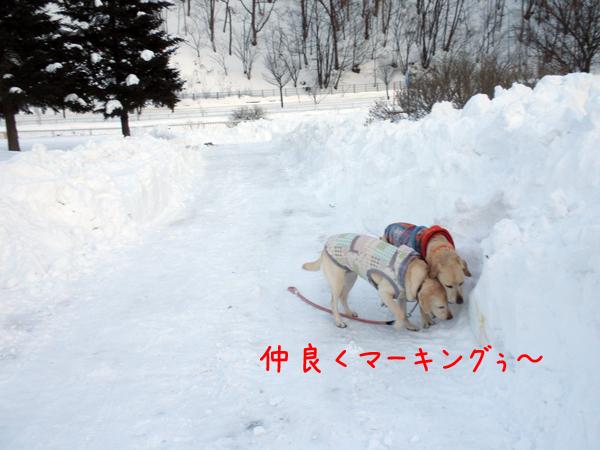 kaeri_20120113210155.jpg