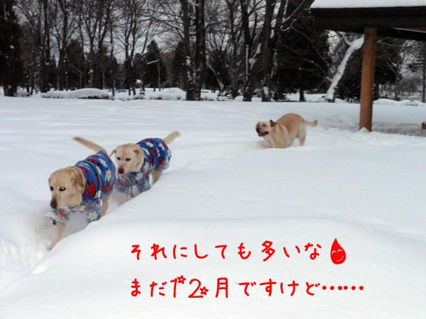 kaerimiti_20111229213857.jpg