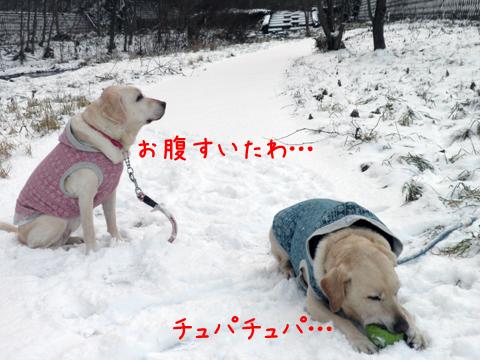 kaero2_20111202223144.jpg