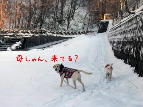kasenziki_20111208213549.jpg
