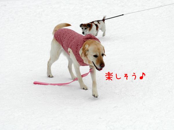 kotohiroba2.jpg