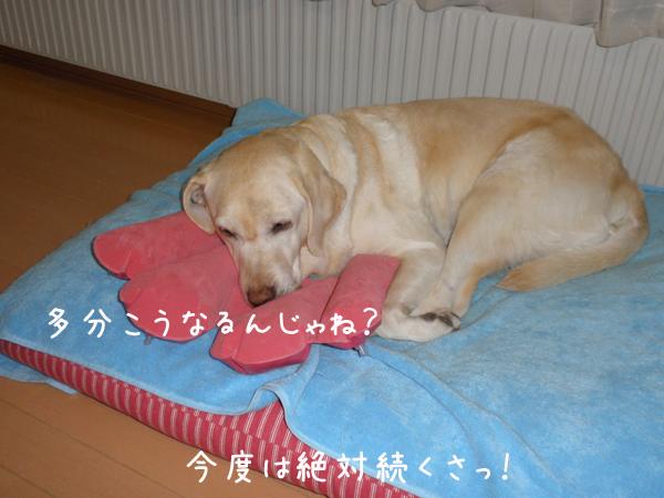 kotuban3.jpg
