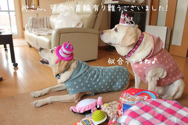 kubiwa2_20120402180740.jpg