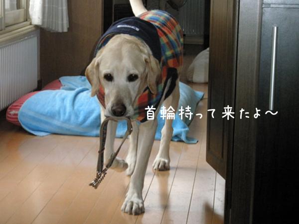 kubiwa_20120325172941.jpg