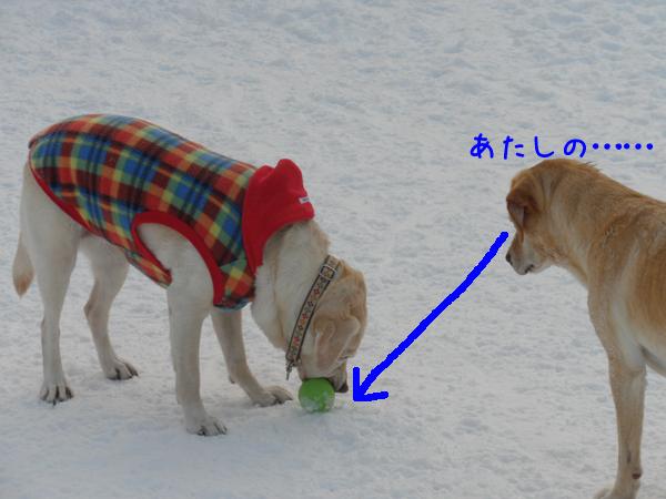 lee1_20120124204245.jpg