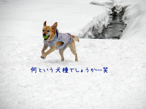 lee2_20120303205037.jpg