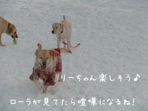 lee_20111225211825.jpg