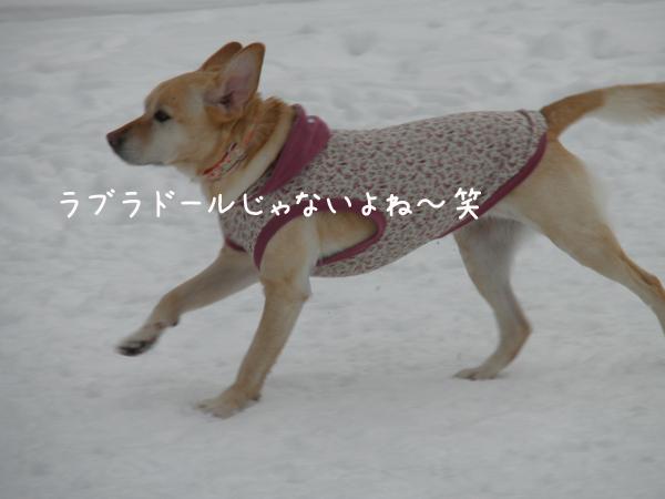 lee_20120122214831.jpg