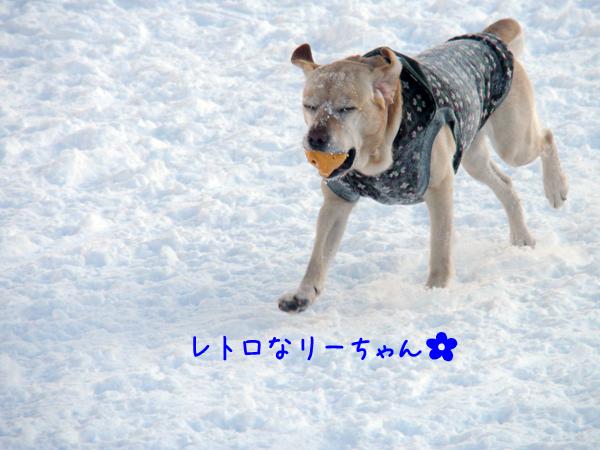 lee_20120130214311.jpg
