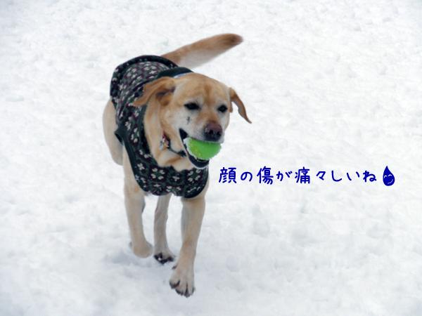 lee_20120301211213.jpg
