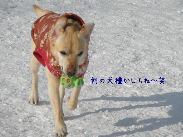 lee_20120321190040.jpg