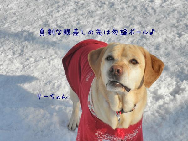 lee_20120327234336.jpg