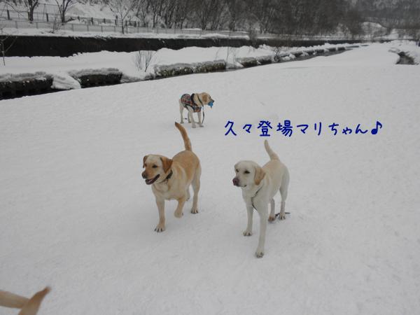 mari_20120325174407.jpg