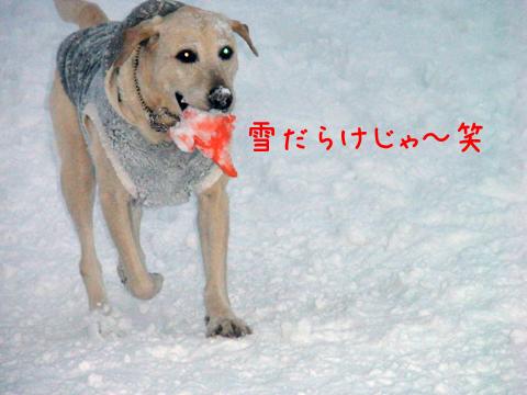 maru1_20111213233211.jpg