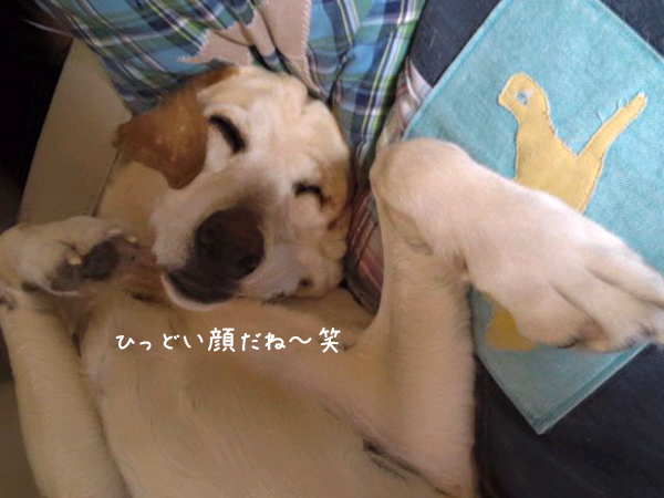 maru1_20120313215748.jpg