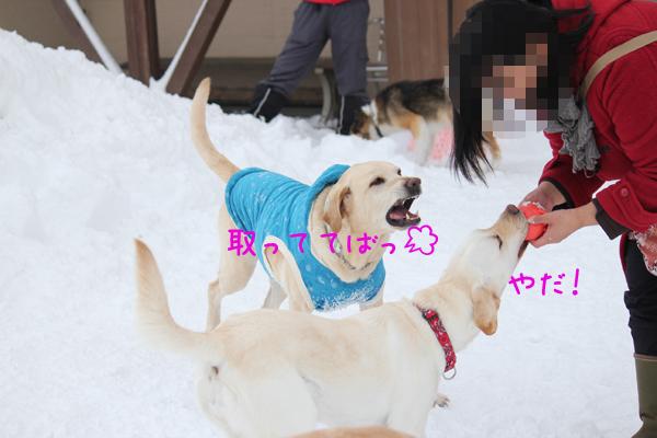 maru2_20120204204637.jpg