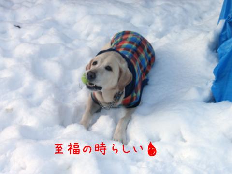 maru_20111208213938.jpg