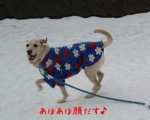 maru_20111221203656.jpg