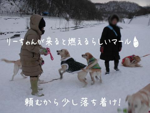 maru_20111224194456.jpg