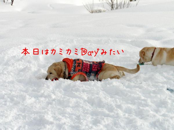 maru_20120110214151.jpg