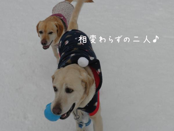 maru_20120122214832.jpg