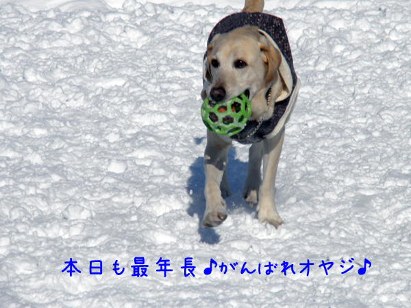maru_20120126215125.jpg