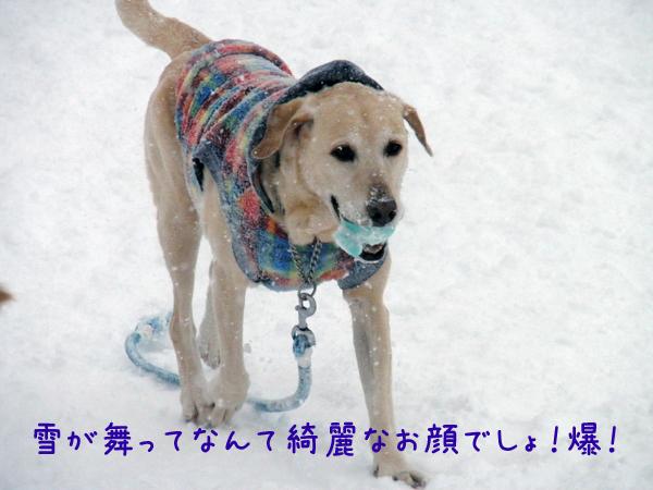 maru_20120129223703.jpg