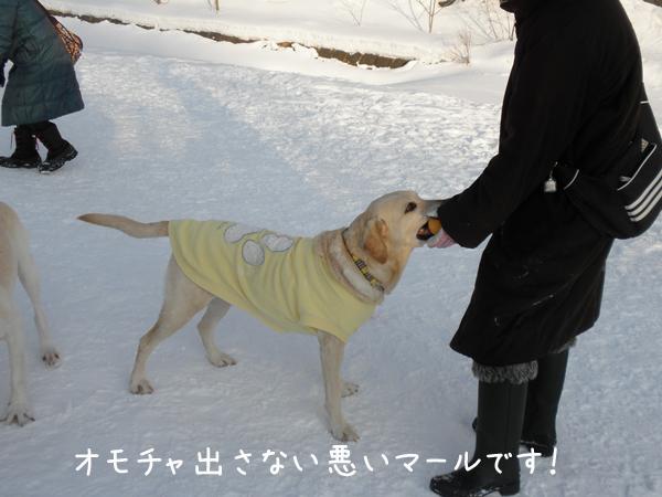 maru_20120131204859.jpg