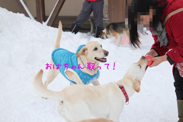 maru_20120204204638.jpg