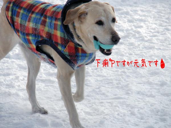 maru_20120217223426.jpg